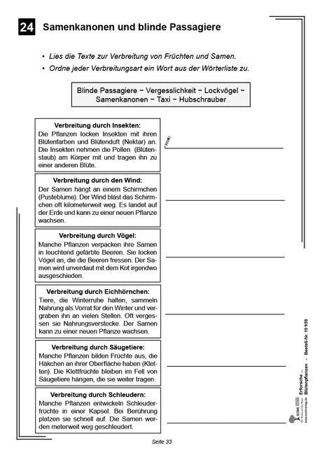 Kopiervorlagen Grundschule Sachunterricht - Blütenpflanzen Klasse 1 bis 4
